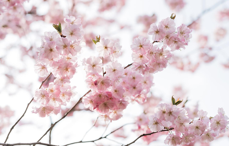 Blog-Portraitshooting-Kirschblüte-Frühling-München-Lichtmädchen-Fotografie29 - (C) Lichtmädchen Fotografie Nicki Schäfer